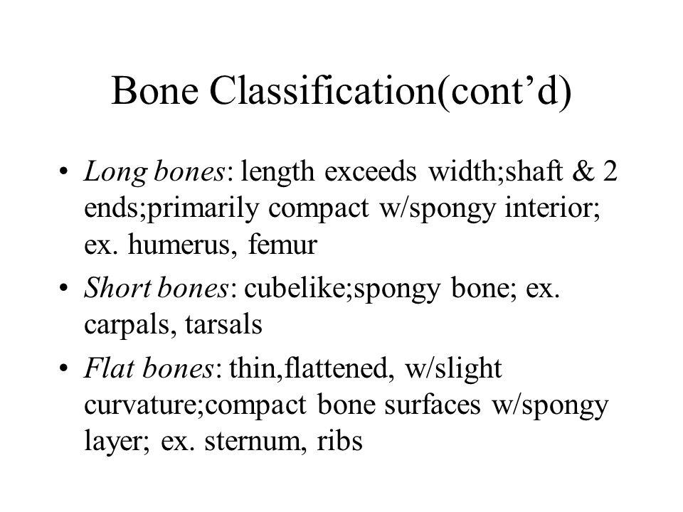 Bone Classification(cont'd)