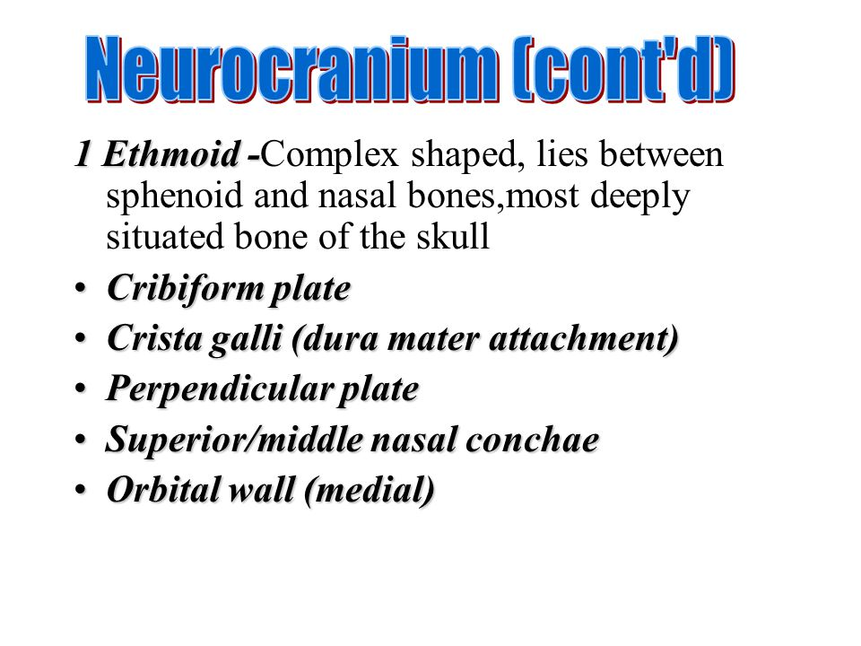 Neurocranium (cont d) 1 Ethmoid -Complex shaped, lies between sphenoid and nasal bones,most deeply situated bone of the skull.