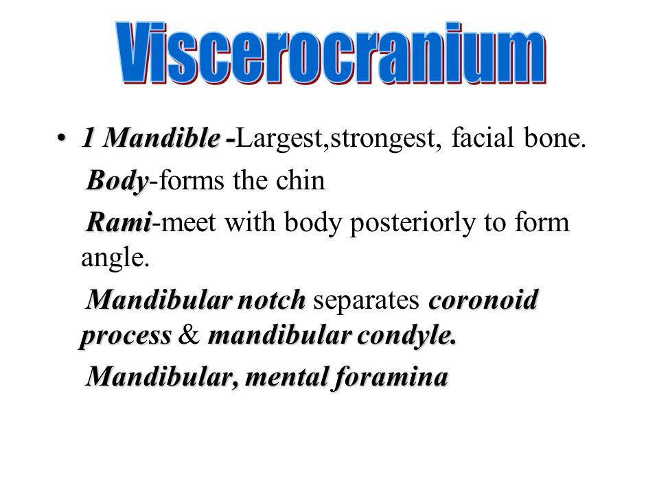 Viscerocranium 1 Mandible -Largest,strongest, facial bone.