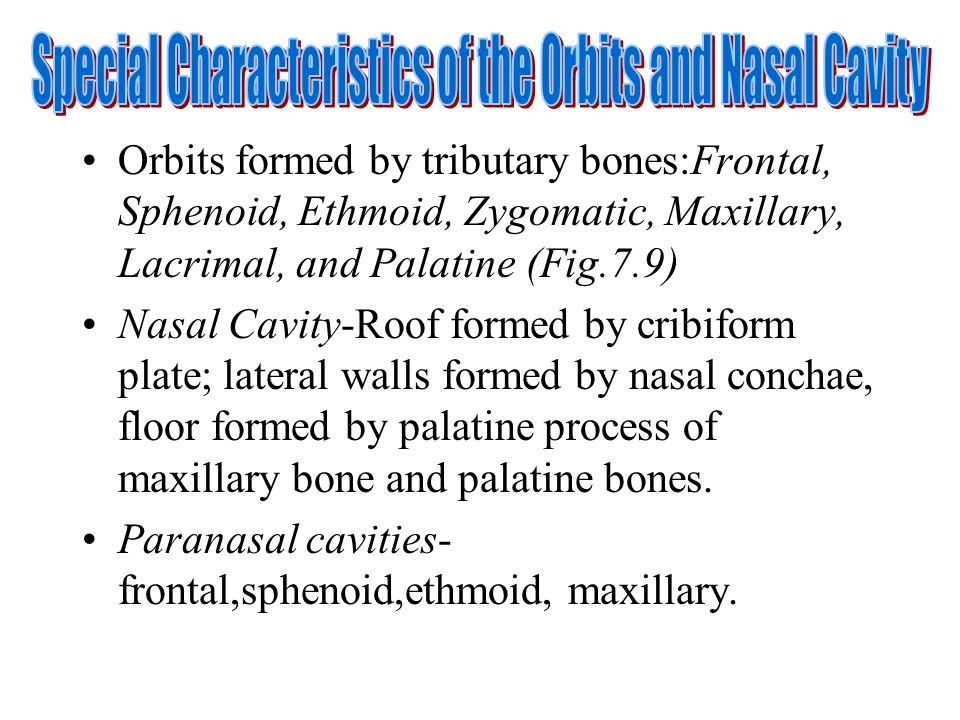 Special Characteristics of the Orbits and Nasal Cavity