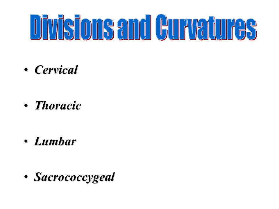 Divisions and Curvatures