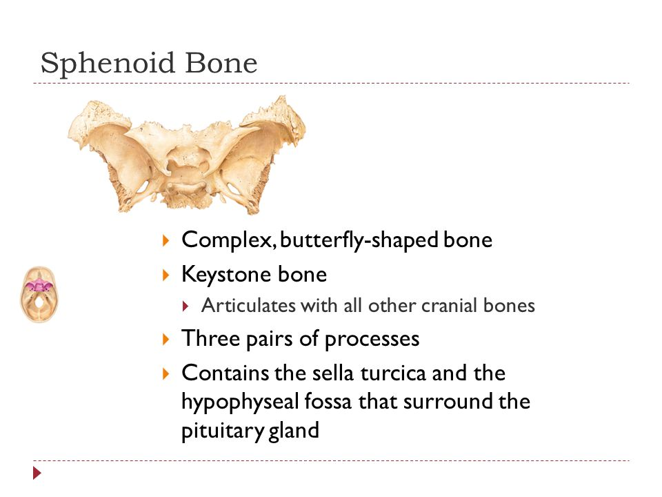chapter 7: the skeleton part a. - ppt video online download, Human Body