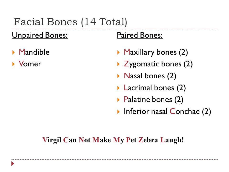 Facial Bones (14 Total) Unpaired Bones: Mandible Vomer Paired Bones: