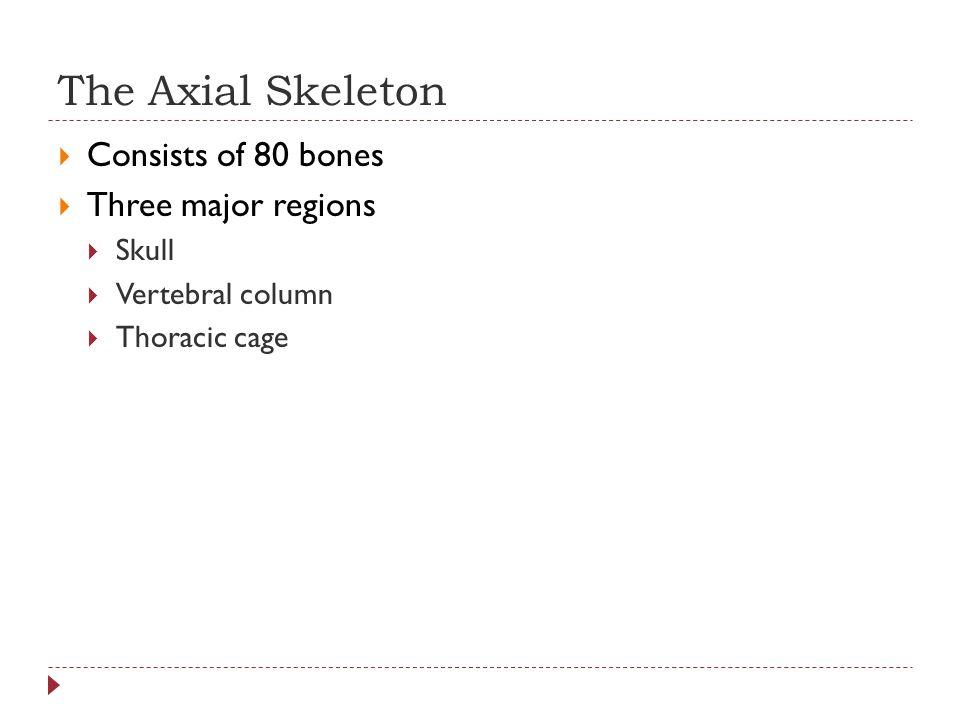 The Axial Skeleton Consists of 80 bones Three major regions Skull