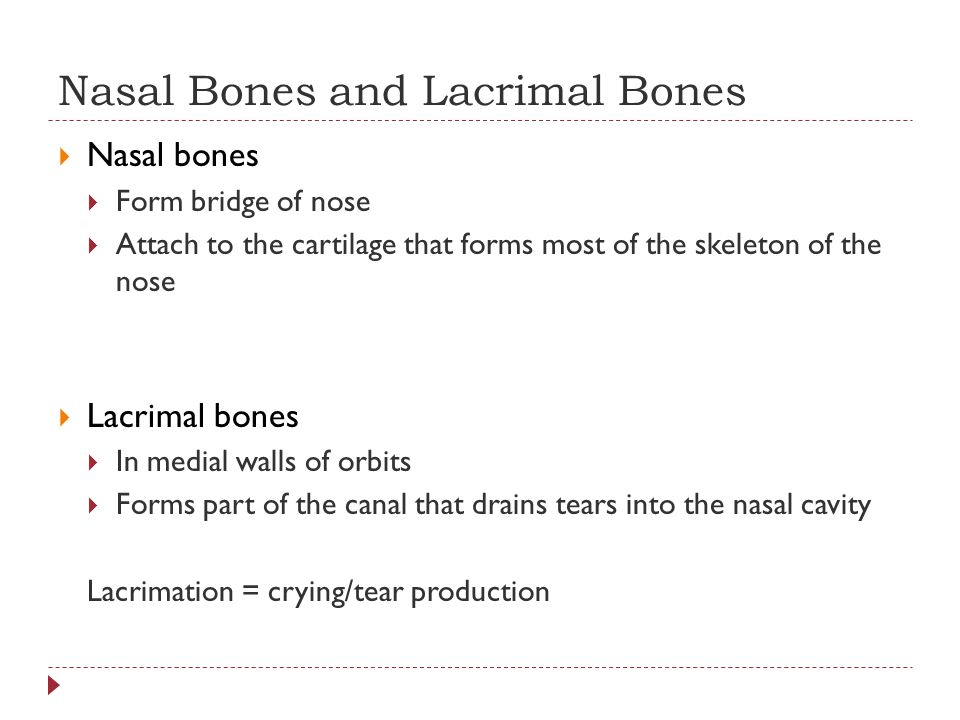 Nasal Bones and Lacrimal Bones