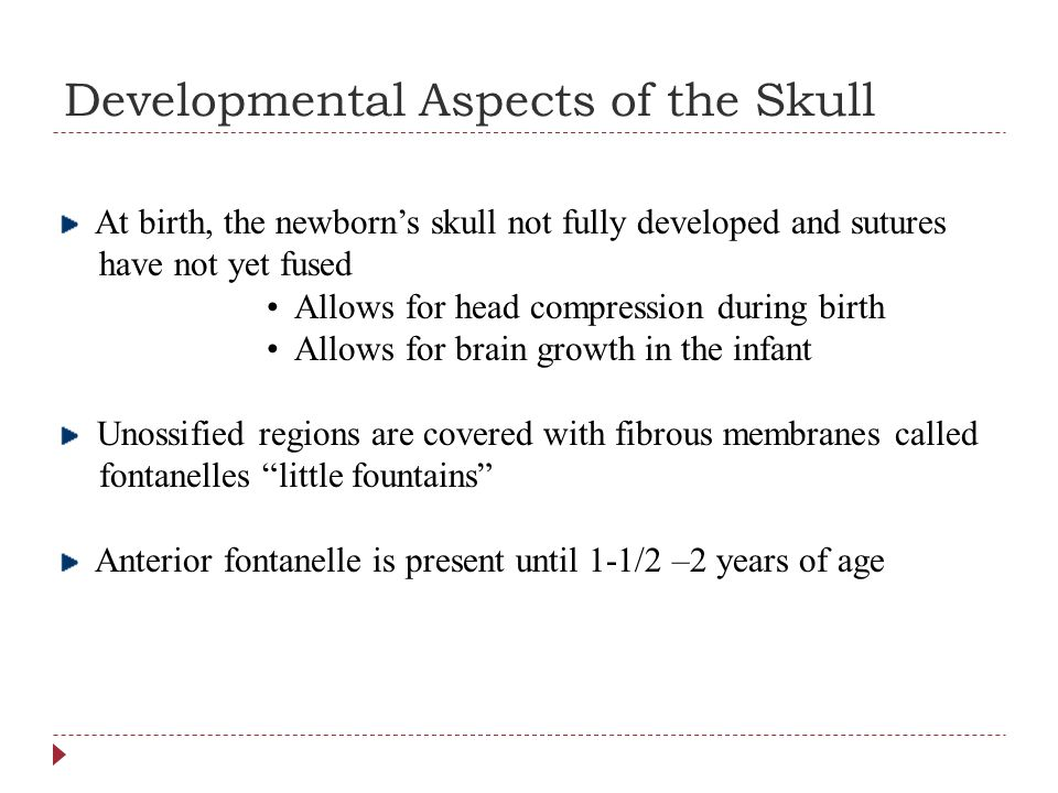 Developmental Aspects of the Skull