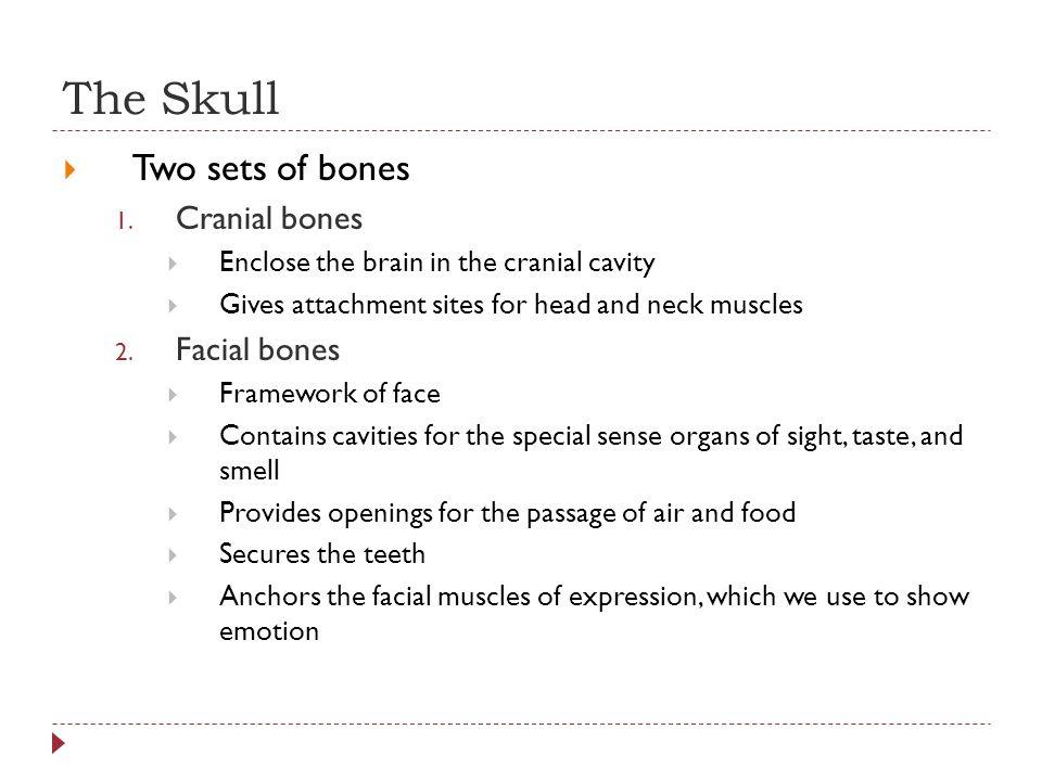 The Skull Two sets of bones Cranial bones Facial bones