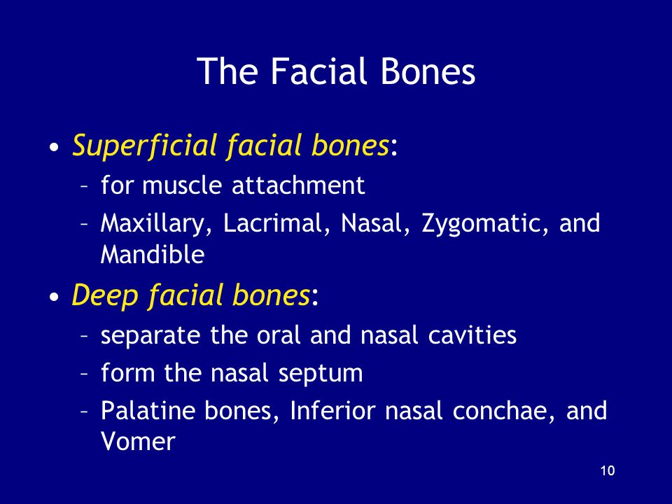 The Facial Bones Superficial facial bones: Deep facial bones: