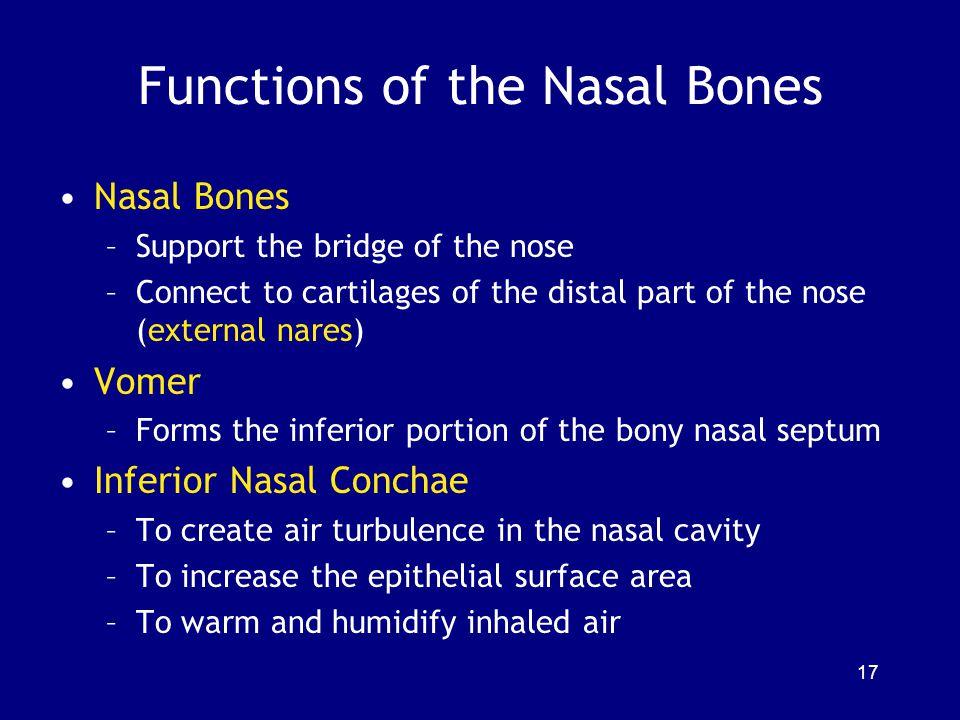 Functions of the Nasal Bones
