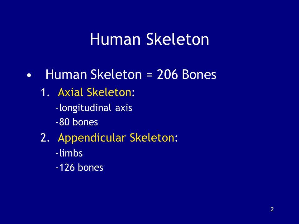 Human Skeleton Human Skeleton = 206 Bones Axial Skeleton: