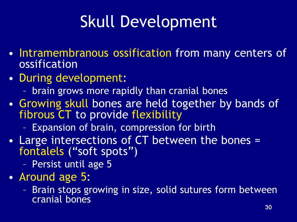 Skull Development Intramembranous ossification from many centers of ossification. During development:
