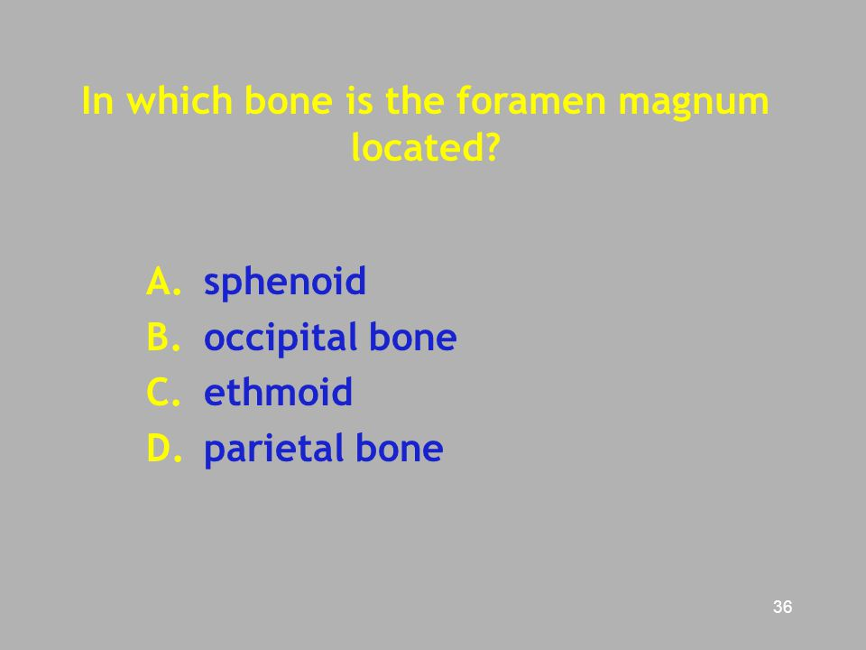 In which bone is the foramen magnum located