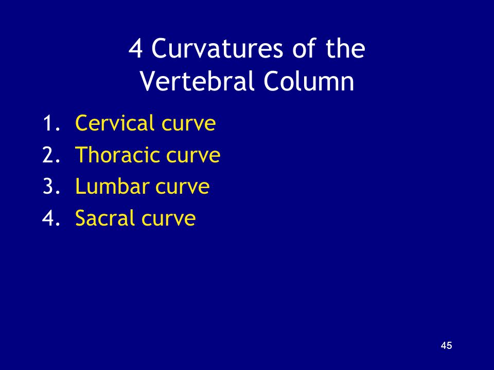 4 Curvatures of the Vertebral Column