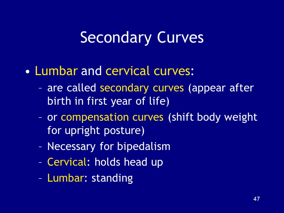 Secondary Curves Lumbar and cervical curves:
