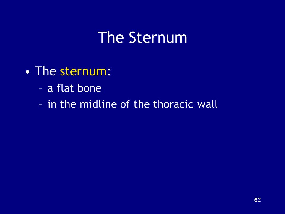 The Sternum The sternum: a flat bone