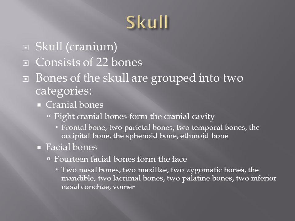 Skull Skull (cranium) Consists of 22 bones