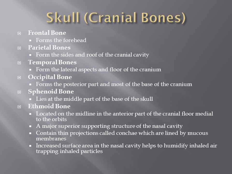 Skull (Cranial Bones) Frontal Bone Parietal Bones Temporal Bones