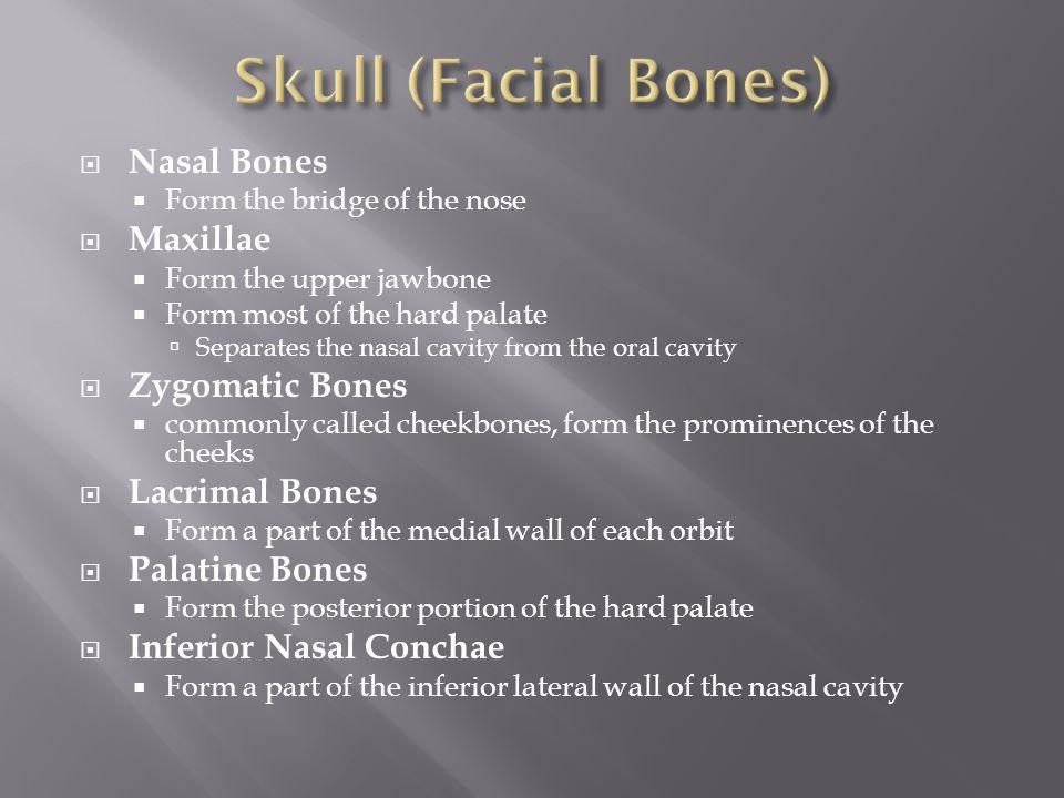 Skull (Facial Bones) Nasal Bones Maxillae Zygomatic Bones