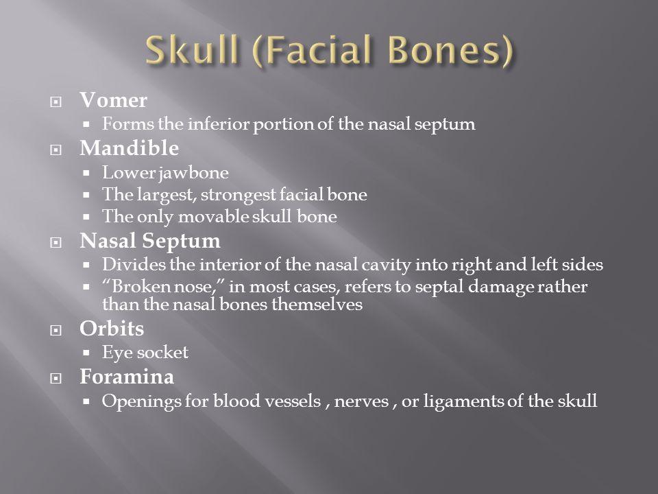 Skull (Facial Bones) Vomer Mandible Nasal Septum Orbits Foramina