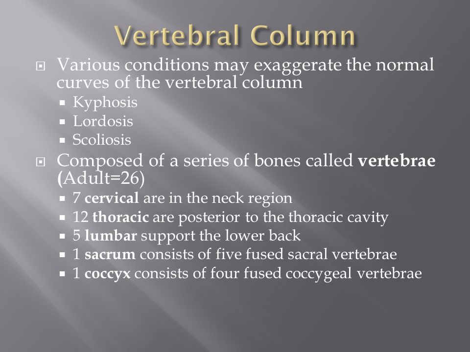 Vertebral Column Various conditions may exaggerate the normal curves of the vertebral column. Kyphosis.