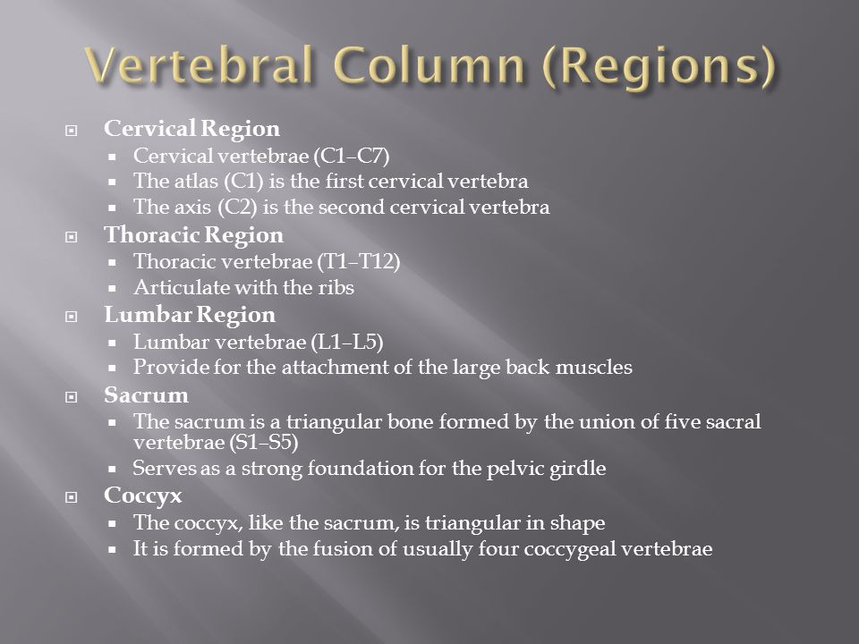 Vertebral Column (Regions)