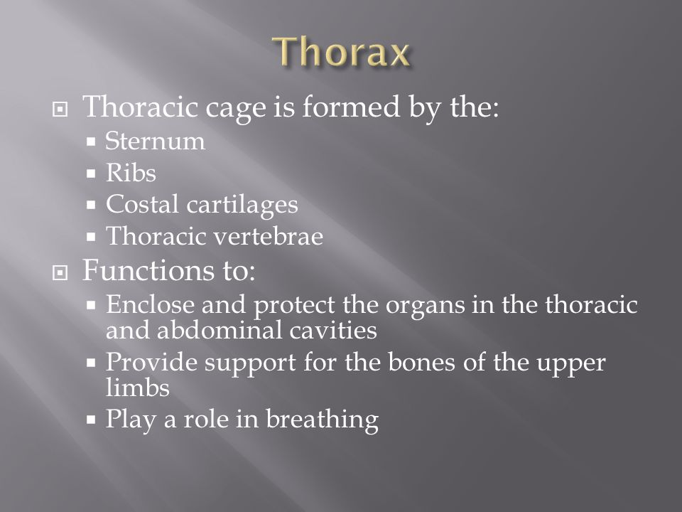 Thorax Thoracic cage is formed by the: Functions to: Sternum Ribs