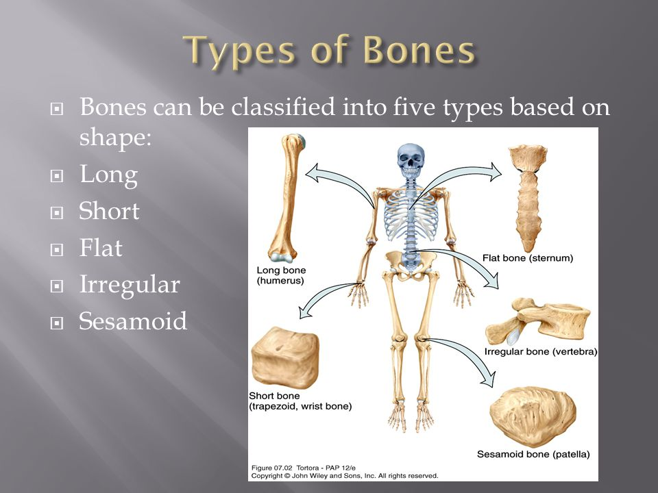 Types of Bones Bones can be classified into five types based on shape: