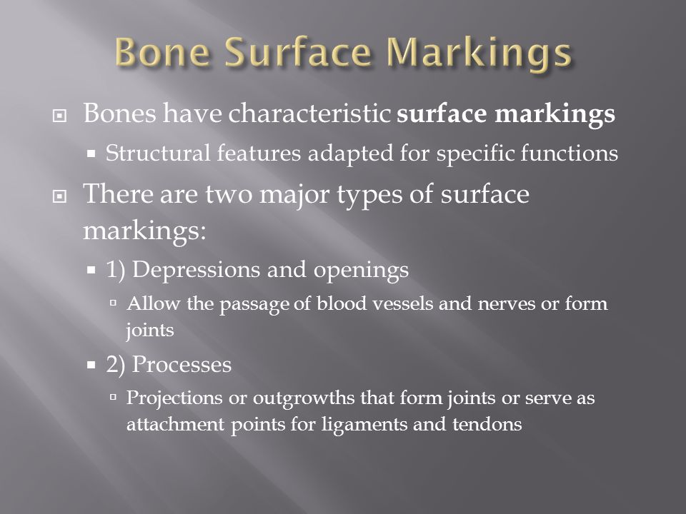 Bone Surface Markings Bones have characteristic surface markings