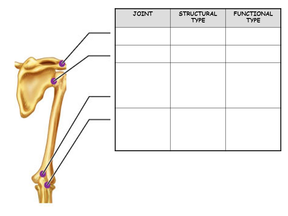 JOINT STRUCTURAL TYPE FUNCTIONAL TYPE