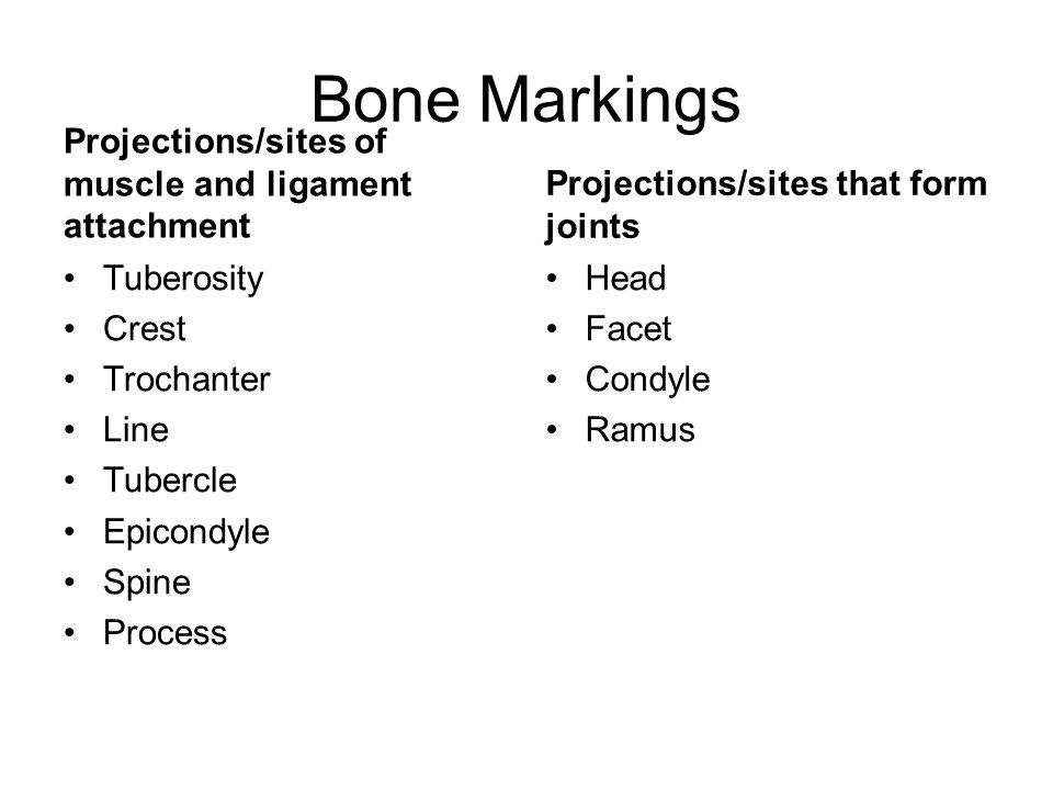 Bone Markings Projections/sites of muscle and ligament attachment
