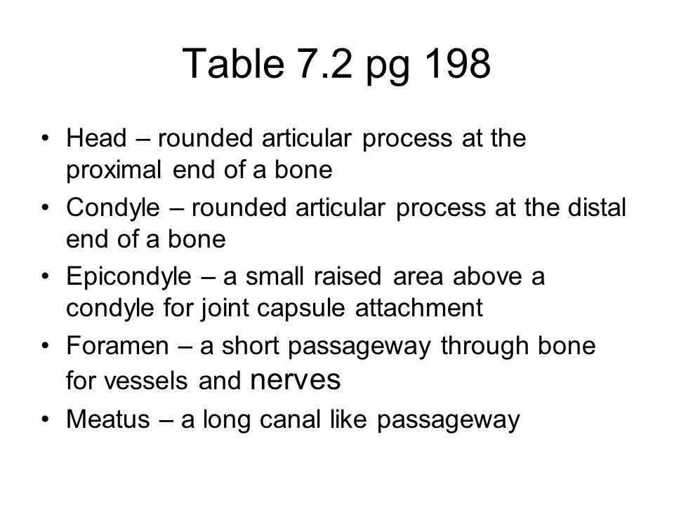 Table 7.2 pg 198 Head – rounded articular process at the proximal end of a bone. Condyle – rounded articular process at the distal end of a bone.