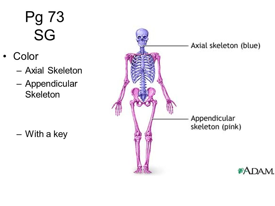 Pg 73 SG Color Axial Skeleton Appendicular Skeleton With a key