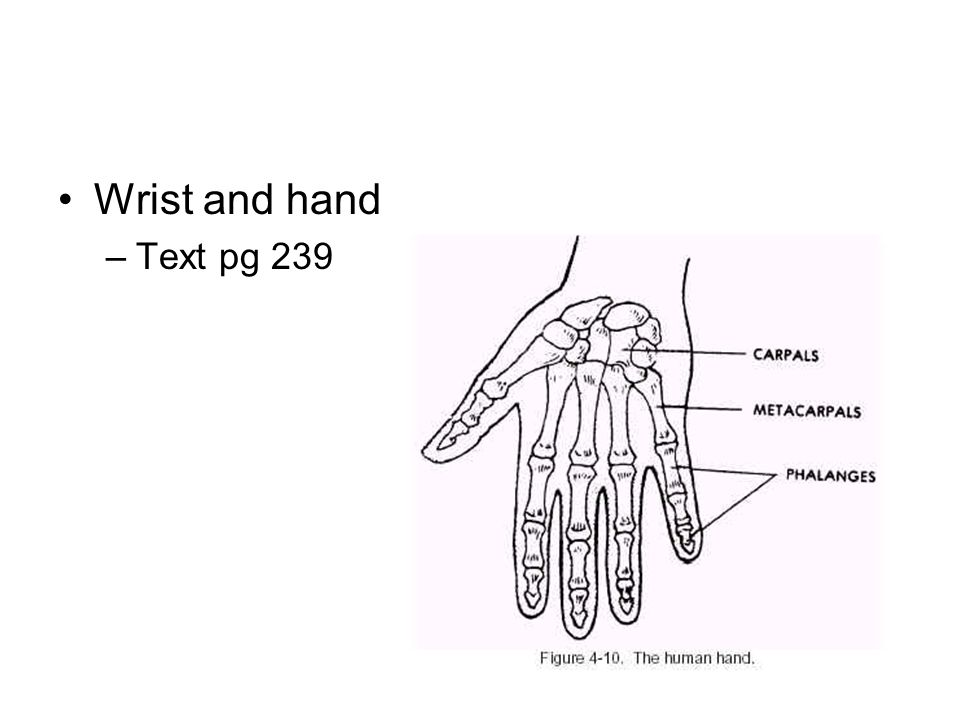 Wrist and hand Text pg 239