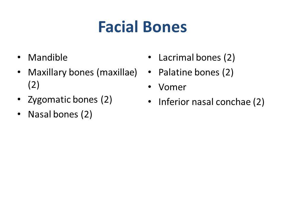 Facial Bones Mandible Maxillary bones (maxillae) (2)