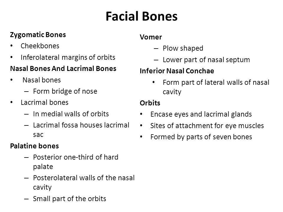 Facial Bones Zygomatic Bones Vomer Cheekbones Plow shaped