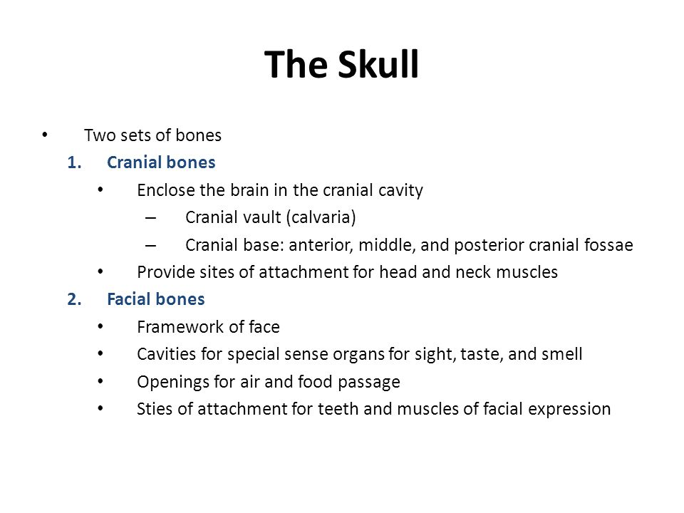 The Skull Two sets of bones Cranial bones