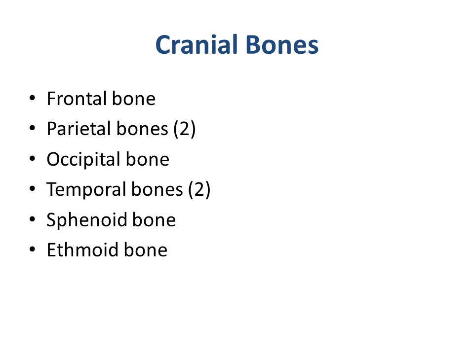 Cranial Bones Frontal bone Parietal bones (2) Occipital bone