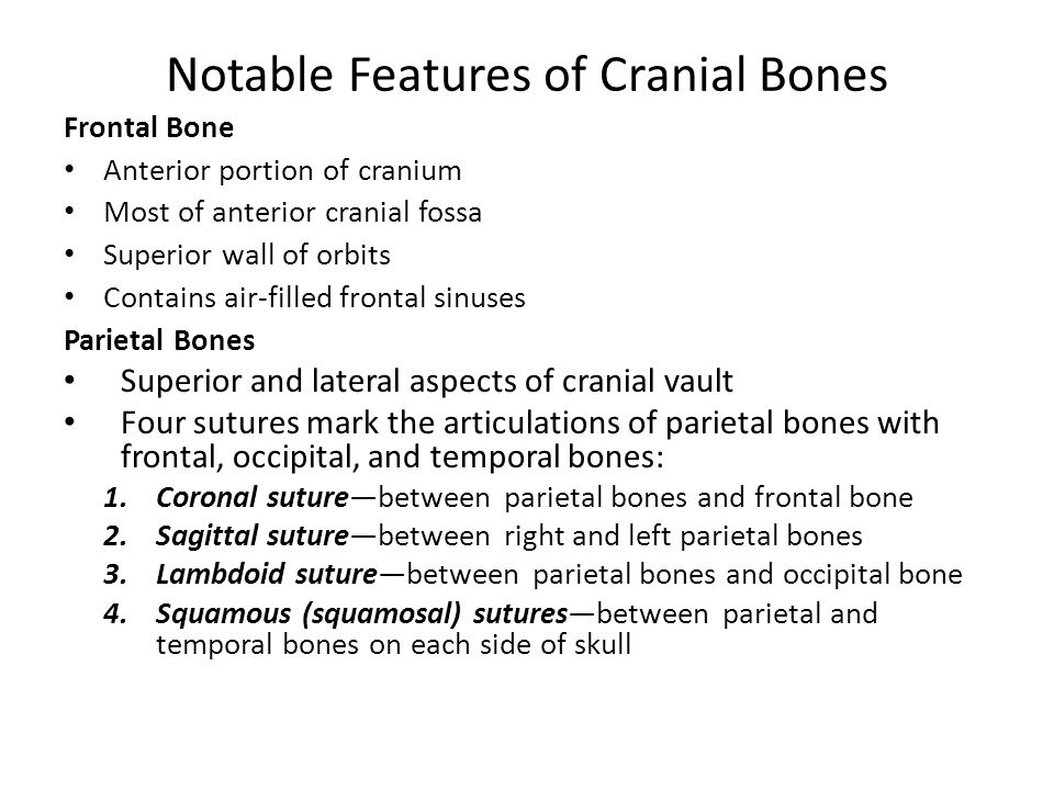 Notable Features of Cranial Bones