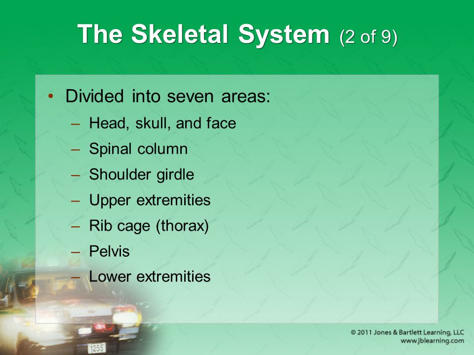 The Skeletal System (2 of 9)
