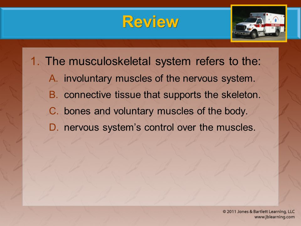 Review The musculoskeletal system refers to the:
