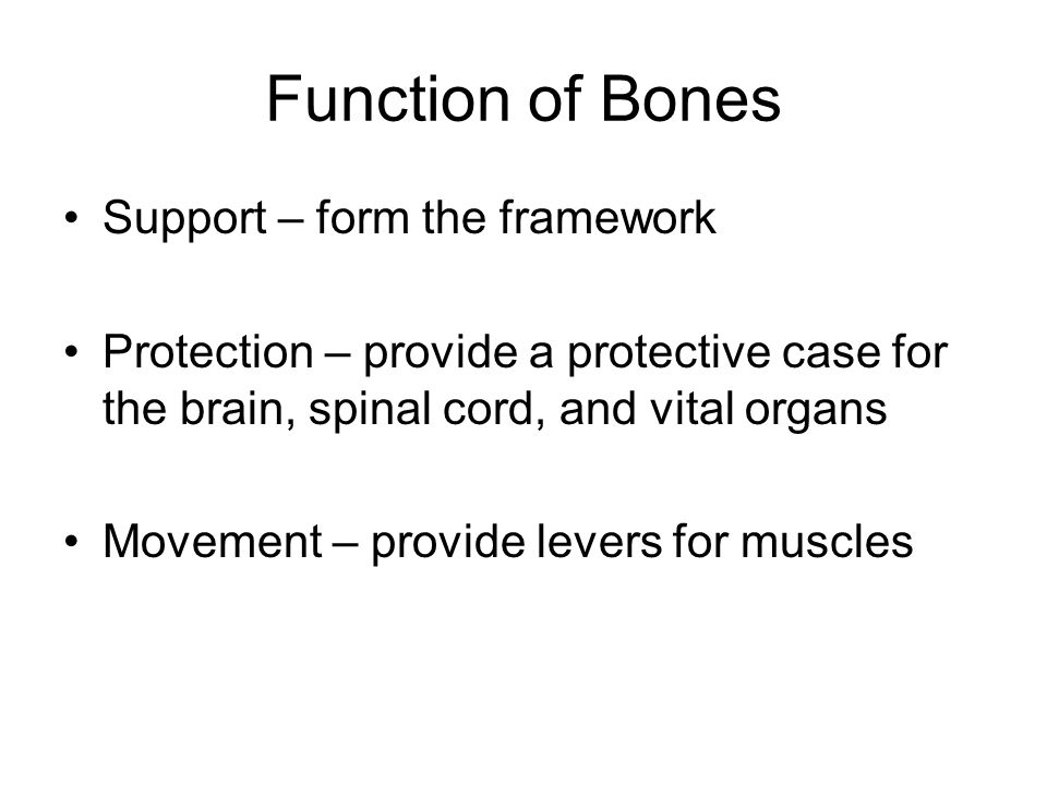 Function of Bones Support – form the framework