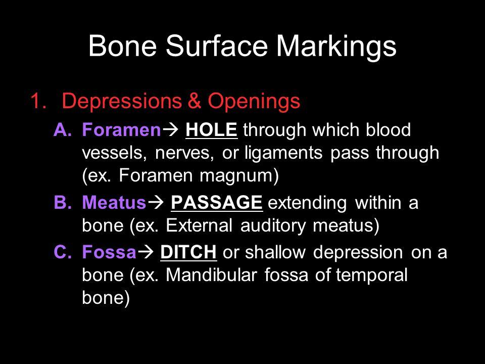 Bone Surface Markings Depressions & Openings