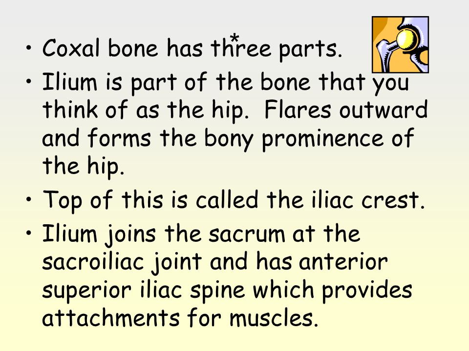 * Coxal bone has three parts.