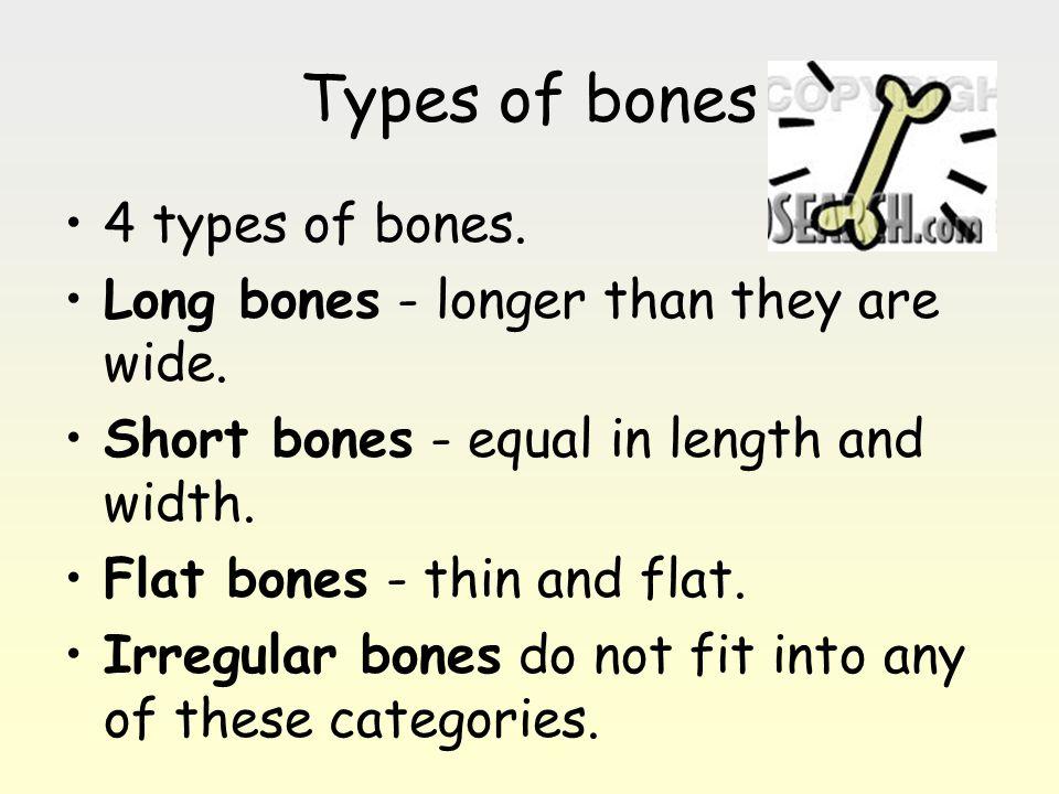 Types of bones 4 types of bones.