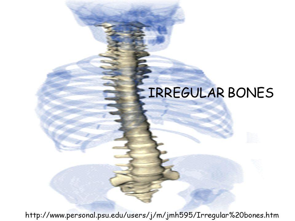 IRREGULAR BONES http://www.personal.psu.edu/users/j/m/jmh595/Irregular%20bones.htm