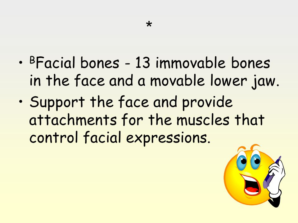 * BFacial bones - 13 immovable bones in the face and a movable lower jaw.