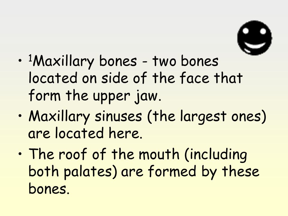 1Maxillary bones - two bones located on side of the face that form the upper jaw.