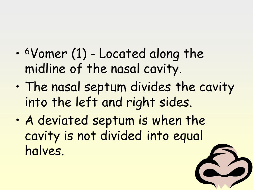 6Vomer (1) - Located along the midline of the nasal cavity.