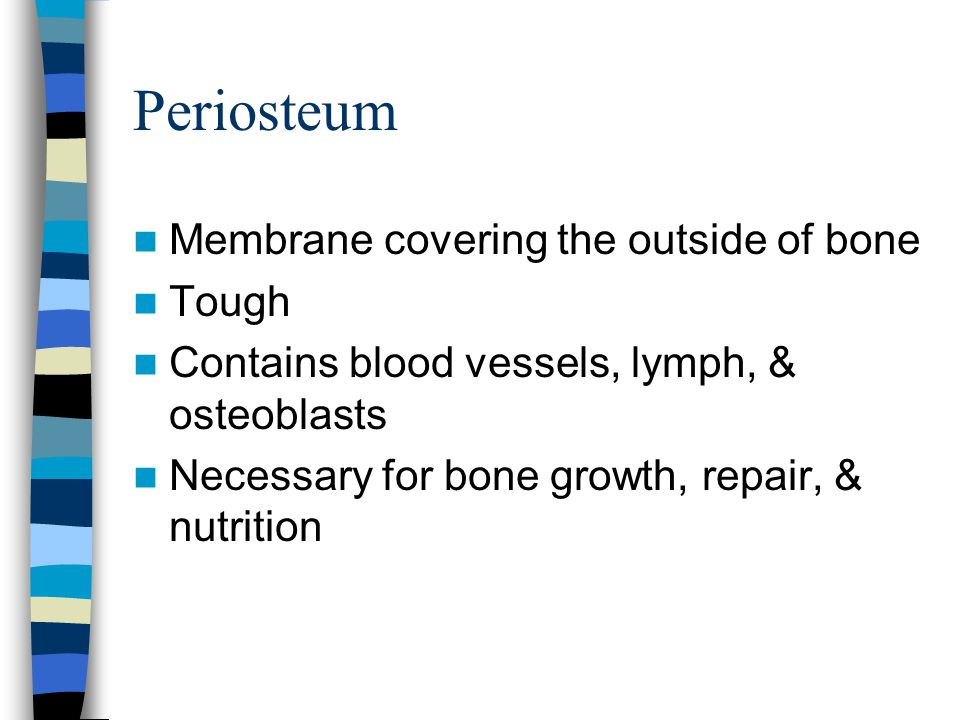 Periosteum Membrane covering the outside of bone Tough