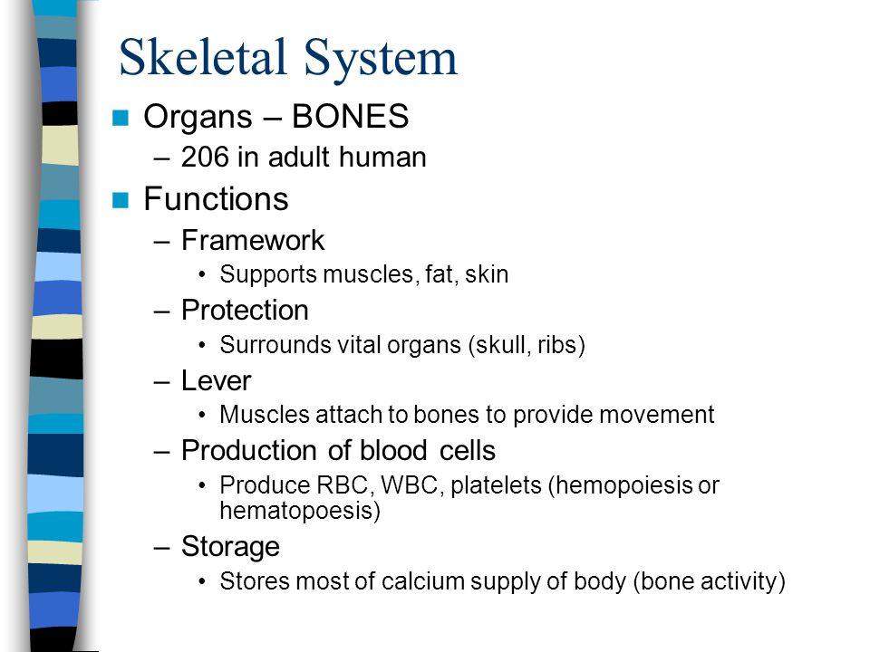 Skeletal System Organs – BONES Functions 206 in adult human Framework